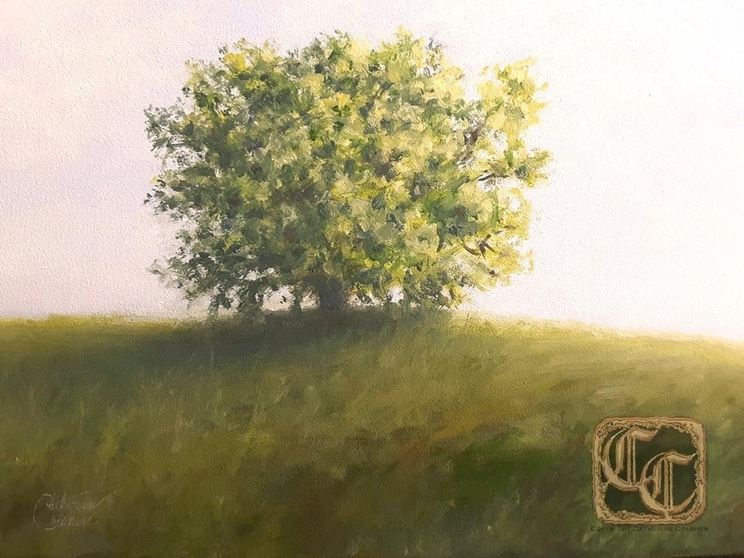 hilltop_tree